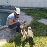PUERTO QUEQUÉN: Rescate de un pingüino