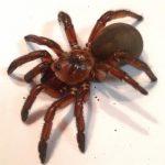 CIENCIA:  El secreto de las arañas