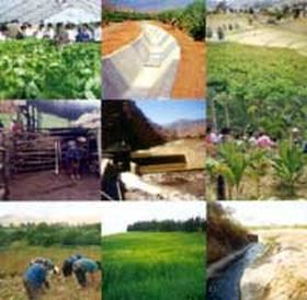 AGRO: Confirman que habrá muy altos rindes y cosecha récord de soja