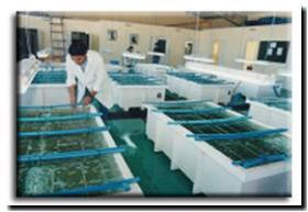 Formosa novedosa experiencia para criaderos de peces en for Criadero de pescado