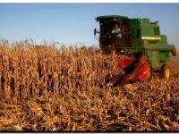 AGRO: Buenas expectativas para la campaña gruesa