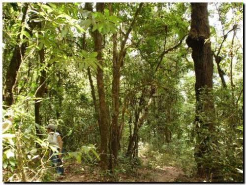 Día Internacional de los Bosques 2021