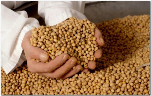 AGRO: El precio de la soja podría haber alcanzado un piso