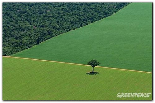 Productores de soja denunciarán a Monsanto ante la Comisión Nacional de Defensa de la Competencia