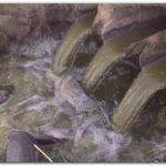 ECOLOGÍA: Biodegradación y detoxificación de efluentes contaminados