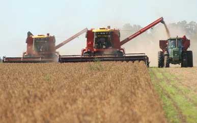 AGRO: Prevén cosecha récord de soja y esperan mayor producción de girasol