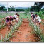 SINDICALES: Ahora, los trabajadores rurales van por aumentos salariales.