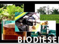 BIODIÉSEL: Se quedó sin mercados externos y sus plantas están paralizadas
