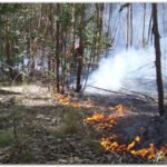 NECOCHEA: Recomendaciones para prevenir incendios y derroche de agua