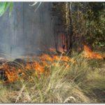 NECOCHEA: Incendios en el Parque Miguel Lillo