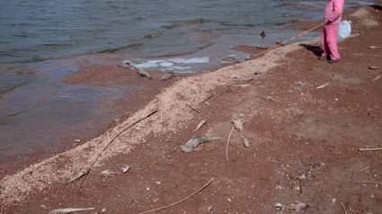 PESCA: Las lagunas bonaerenses incrementaron la cantidad de pejerreyes