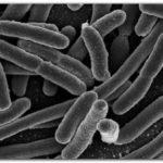 SALUD: Bacterias versus bacterias
