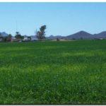 AGRO: ¿Qué cultivos de invierno conviene sembrar?