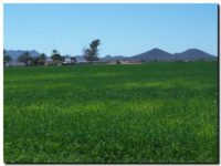 ARBA postergó el vencimiento del Inmobiliario Rural