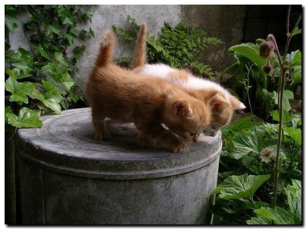COVID: Veterinarios advirtieron cuadros graves en perros y gatos