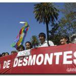 ECOLOGÍA: La Corte aceptó a Greenpeace, FARN y Fundación Vida Silvestre en la causa contra la deforestación en Salta