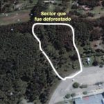 """NECOCHEA: La deforestación en el Parque """"Miguel Lillo"""" analizada por el bloque de Unión Peronista"""