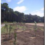 NECOCHEA: Forestación del sector del Parque Miguel Lillo