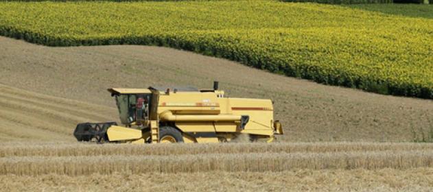 AGRO: Prevén precios sostenidos