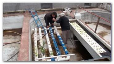 NECOCHEA: La Estación de Piscicultura recibió 400 mil ovas de pejerrey para sembrar el río