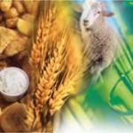 AGRO: Nutrición, ¡mucho más que comida!
