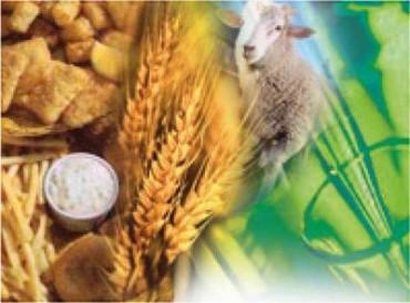 CAMPO: Quedan 10 millones de toneladas de soja sin vender y crece la bronca del Gobierno