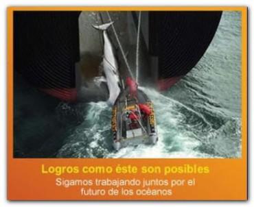 ECOLOGÍA: Un logro histórico para las ballenas!