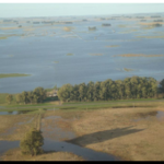AGRO: Graves pérdidas en trigo por el temporal en el sur bonaerense