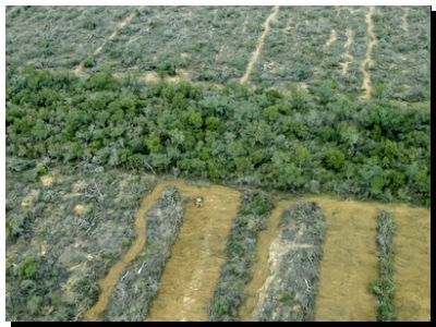 La pérdida de bosques y el deterioro ambiental da 'alas' a los virus y lo que 'vendrá'