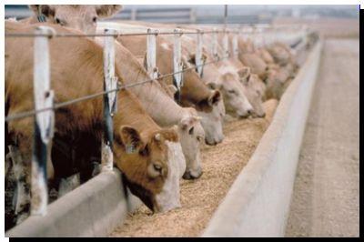 AGRO: Argentina espera que en un mes se abra un nuevo mercado europeo para carne de feedlot