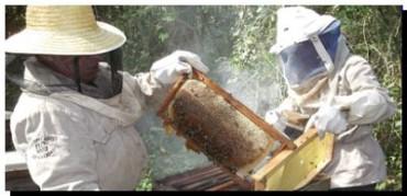ECOLOGÍA: La miel Maya le gana a Monsanto