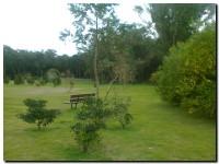 reforestado_02