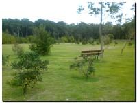 reforestado_03