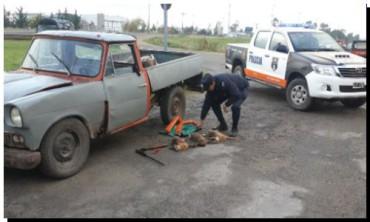 POLICIALES: Loberenses que cazaban en Necochea fueron aprehendidos