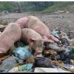 SALUD: Detectan 50 casos de triquinosis en Mar del Plata, Batán y Miramar