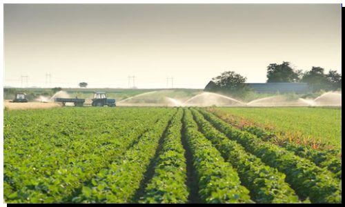 AGRO: Contratistas de cosecha gruesa piden ajuste