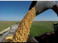 AGRO: La cosecha de maíz se encamina a un nuevo récord