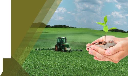 AGRO: Complicaciones con el maíz y la soja