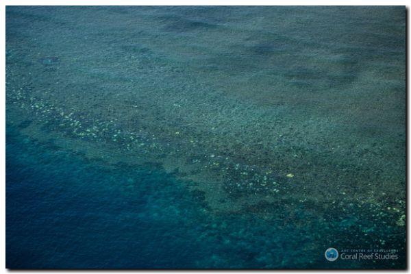 ECOLOGÍA: La Gran Barrera de Coral, en alerta máxima