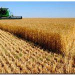 AGRO: En el campo se entusiasman con duplicar la cosecha de trigo