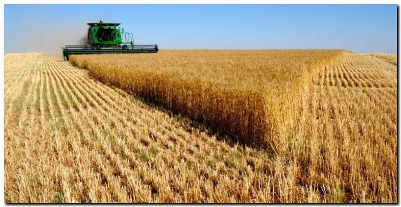 Trigo: fuerte crecimiento de las exportaciones y del área sembrada
