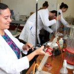 Desarrollan en Chaco harina y cerveza para celíacos a partir del sorgo colorado