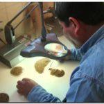 Trigo: se analizará en forma gratuita la calidad del grano en la provincia de Buenos Aires