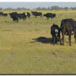 GANADERÍA: Sugerencias ante la sequía