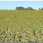 AGRO: 40 por ciento de pérdidas en el sudeste bonaerense