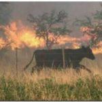 AGRO: Llamado a la solidaridad del ruralismo confederado