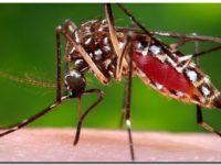 Dengue. La Provincia «vigila» varios municipios por aumento de casos