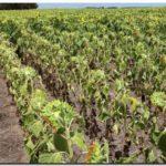 AGRO: Llovió en el sudeste bonaerense pero el agua no fue suficiente