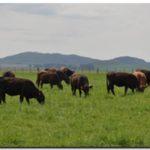 AGRO: Festucosis, conocer para prevenir