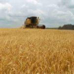 AGRO: Cómo impacta las lluvias de este año en la producción de trigo